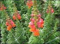 supporti-fiori-ortaggi-1